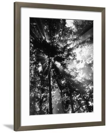 Sunbeam Passing Through Trees, Olympic National Park, Washington State, USA-Adam Jones-Framed Photographic Print