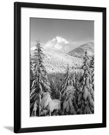 Winter Frost Trees on Mt. Hood, Mt Hood National Forest, Oregon, USA-Stuart Westmorland-Framed Photographic Print