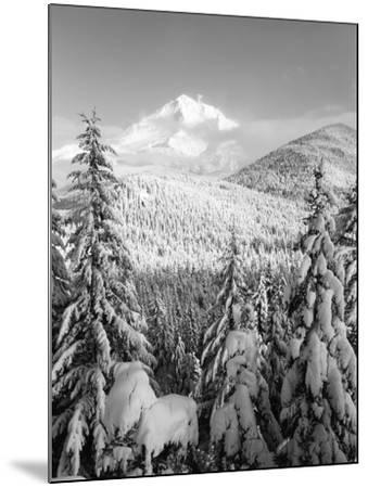 Winter Frost Trees on Mt. Hood, Mt Hood National Forest, Oregon, USA-Stuart Westmorland-Mounted Photographic Print