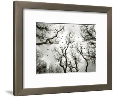 Crow Rookery-Jamie Cook-Framed Premium Photographic Print