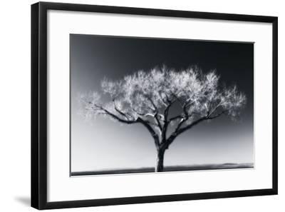 Glowing Tree-Jamie Cook-Framed Premium Photographic Print
