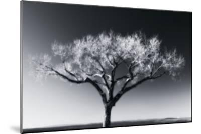 Glowing Tree-Jamie Cook-Mounted Premium Photographic Print