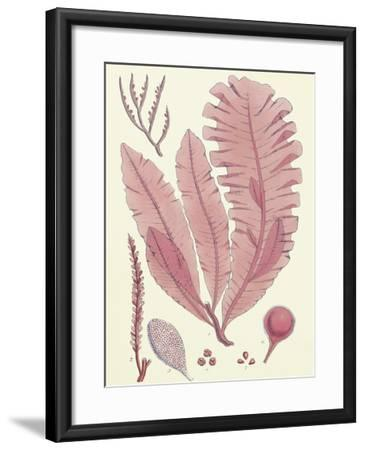 British Seaweed Plate CLL-William Henry Harvey-Framed Premium Giclee Print