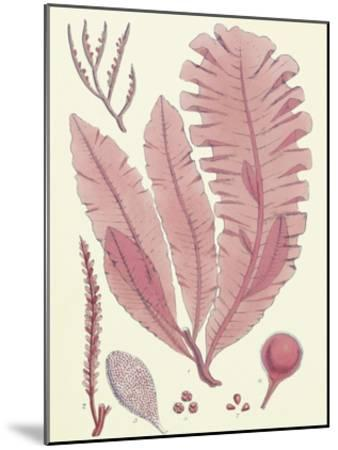 British Seaweed Plate CLL-William Henry Harvey-Mounted Premium Giclee Print