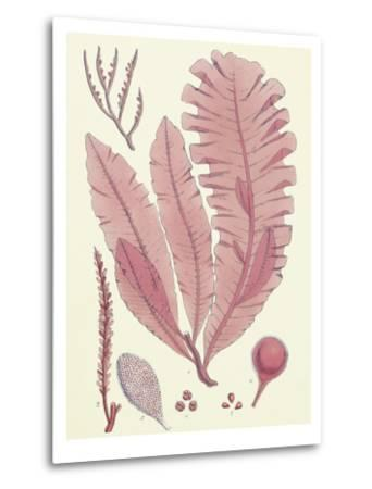 British Seaweed Plate CLL-William Henry Harvey-Metal Print