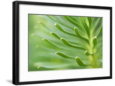 Green Goddess 2-Ross Gordon-Framed Premium Photographic Print