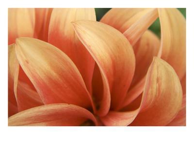 Dahlia Delovely-Karen Ussery-Framed Premium Photographic Print