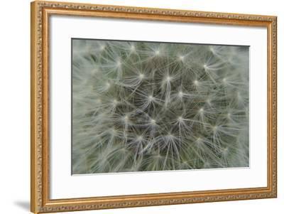 Dandelion Puff-Karen Ussery-Framed Premium Photographic Print