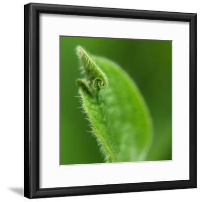 Leaf Curl-Karen Ussery-Framed Premium Photographic Print