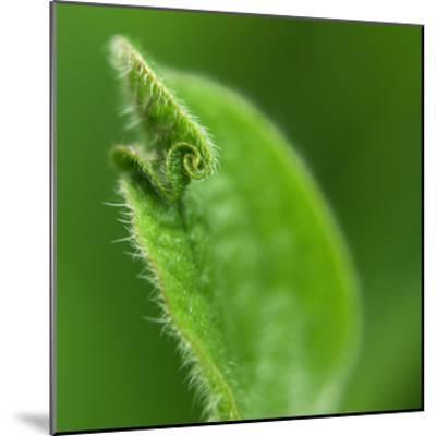 Leaf Curl-Karen Ussery-Mounted Premium Photographic Print
