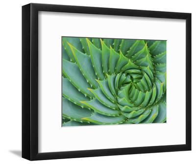 Succulent Swirl-Karen Ussery-Framed Premium Photographic Print