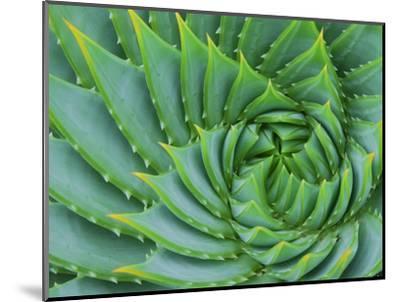 Succulent Swirl-Karen Ussery-Mounted Premium Photographic Print