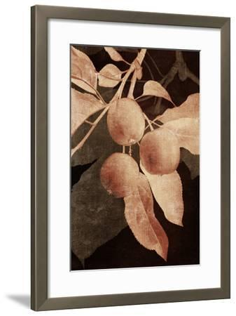Hanging Apples I-Thea Schrack-Framed Premium Photographic Print