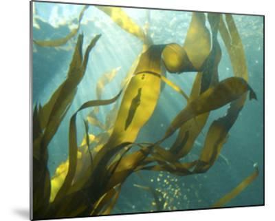 Sea Kelp 2-Karen Ussery-Mounted Premium Photographic Print