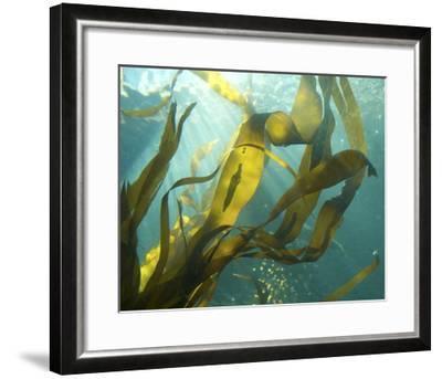 Sea Kelp 2-Karen Ussery-Framed Premium Photographic Print