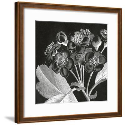 Mespilus Dxyacantha-Thea Schrack-Framed Premium Giclee Print
