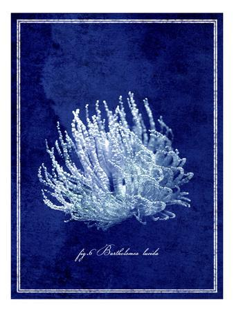 Marine Collection C-GI ArtLab-Framed Premium Photographic Print