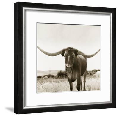 Longhorn-TM Photography-Framed Premium Photographic Print