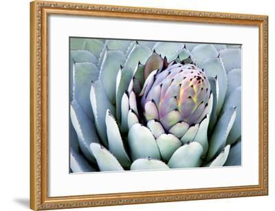 Aloe 2-PhotoDF-Framed Premium Photographic Print