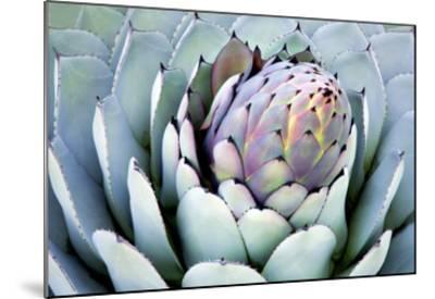 Aloe 2-PhotoDF-Mounted Premium Photographic Print
