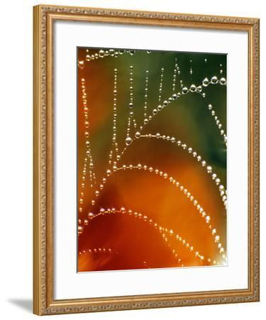 Nature Series 848-PhotoDF-Framed Premium Photographic Print