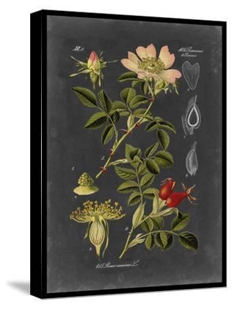 Midnight Botanical I-Vision Studio-Stretched Canvas Print
