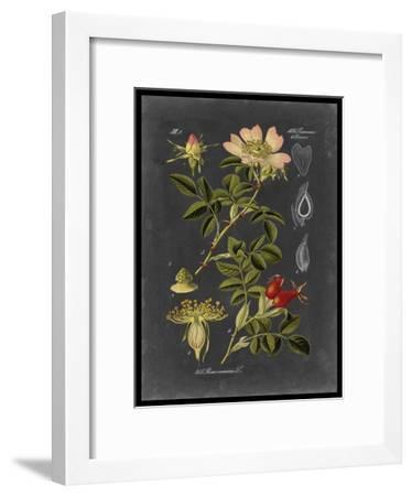 Midnight Botanical I-Vision Studio-Framed Art Print