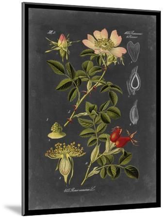 Midnight Botanical I-Vision Studio-Mounted Art Print