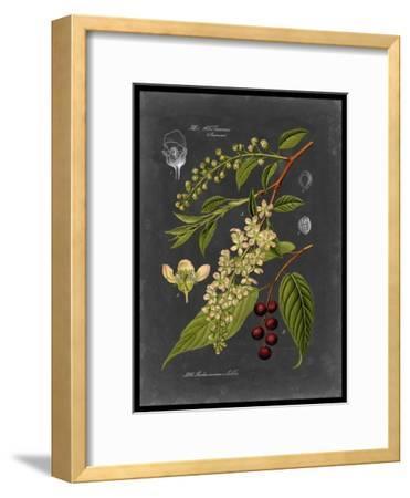 Midnight Botanical II-Vision Studio-Framed Art Print