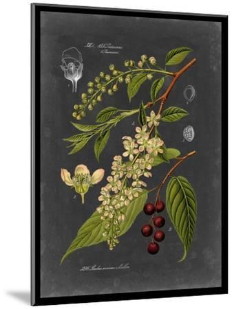 Midnight Botanical II-Vision Studio-Mounted Art Print