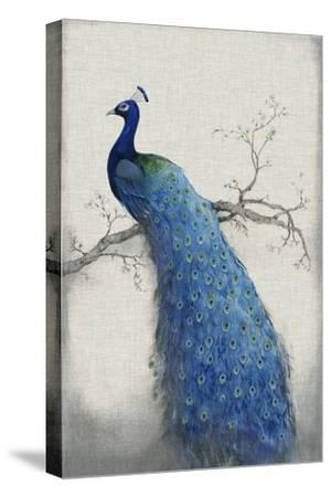 Peacock Blue II-Tim O'toole-Stretched Canvas Print
