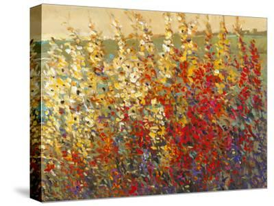 Field of Spring Flowers I-Tim O'toole-Stretched Canvas Print