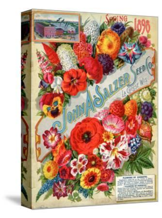 Seed Catalogues: John A. Salzer Seed Co. La Crosse, Wisconsin, Spring 1898--Stretched Canvas Print