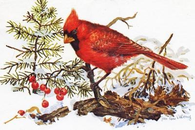 Holiday Christmas Cardinal, Beatrice Litzinger Collection--Stretched Canvas Print