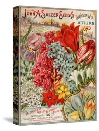 Seed Catalog Captions (2012): John A. Salzer Seed Co. La Crosse, Wisconsin, Autumn 1895--Stretched Canvas Print