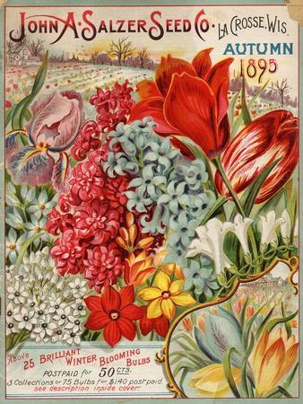 Seed Catalog Captions (2012): John A. Salzer Seed Co. La Crosse, Wisconsin, Autumn 1895--Framed Premium Giclee Print
