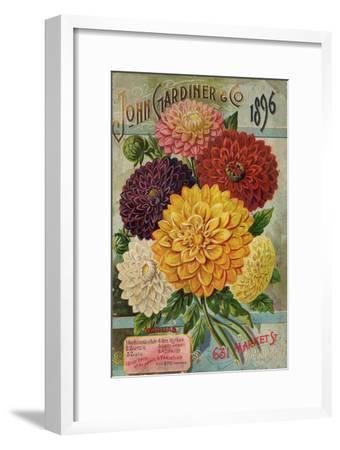 John Gardiner and Co. 1896: Dahlias--Framed Premium Giclee Print