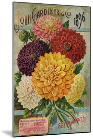 John Gardiner and Co. 1896: Dahlias--Mounted Premium Giclee Print
