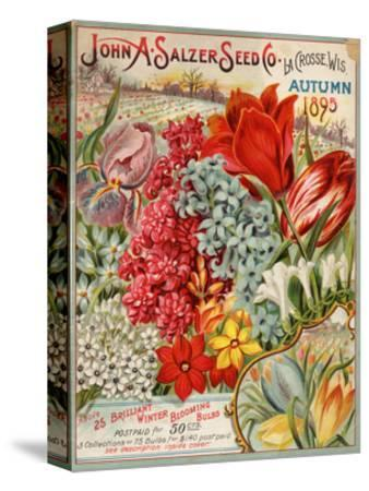 John A. Salzer Seed Co. Autumn 1895--Stretched Canvas Print