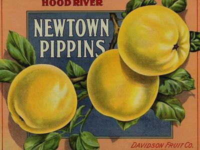 Fruit Crate Labels: Newtown Pippins; Davidson Fruit Company--Stretched Canvas Print