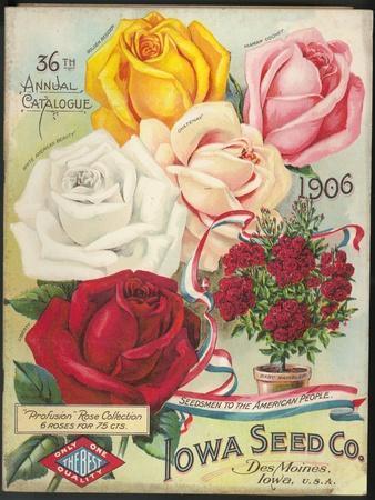 Seed Catalog Captions (2012): Iowa Seed Co. Des Moines, Iowa. 36th Annual Catalogue, 1906--Framed Premium Giclee Print