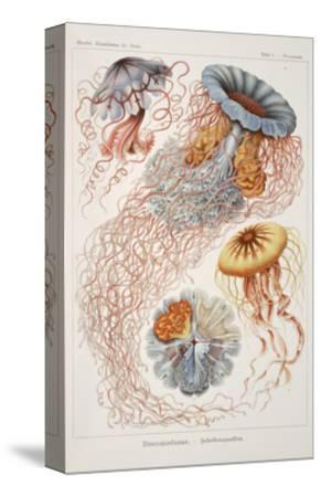 "Smimthsonian Libraries: ""Discomedusae"" by Ernst Heinrich Philipp August Haeckel--Stretched Canvas Print"
