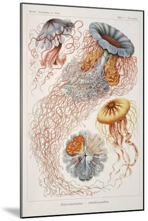 "Smimthsonian Libraries: ""Discomedusae"" by Ernst Heinrich Philipp August Haeckel--Mounted Premium Giclee Print"