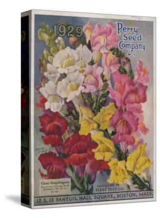 Giant Snapdragons from the Perry Seed Company--Stretched Canvas Print