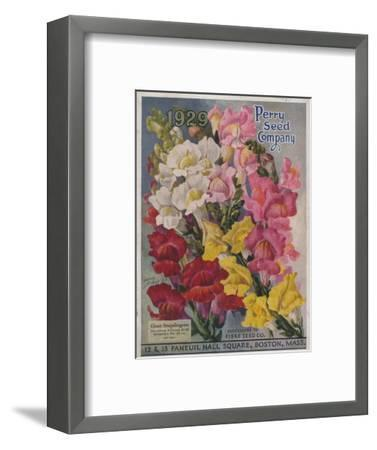 Giant Snapdragons from the Perry Seed Company--Framed Premium Giclee Print