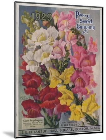 Giant Snapdragons from the Perry Seed Company--Mounted Premium Giclee Print