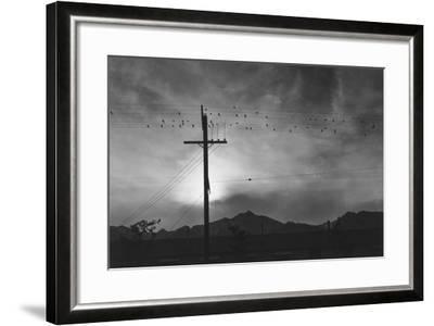 Birds on Wire, Evening, Manzanar Relocation Center', 1943 by Ansel Adams--Framed Photo