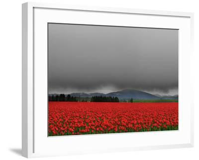 Tulip Fields-Howard Ruby-Framed Photographic Print