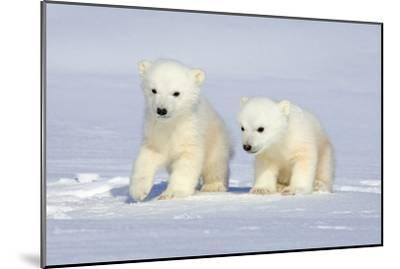 Polar Bear Twins-Howard Ruby-Mounted Photographic Print