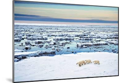 Mother and Cubs at the Shore-Howard Ruby-Mounted Photographic Print